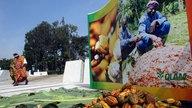 Plakat zur Welt-Kakao-Konferenz in Abidjan 2012 mit Kakaofrüchten im Vordergrund