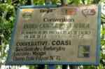 cargill-plantagen